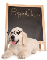 Puppy's 1st Class (up to 13 weeks)